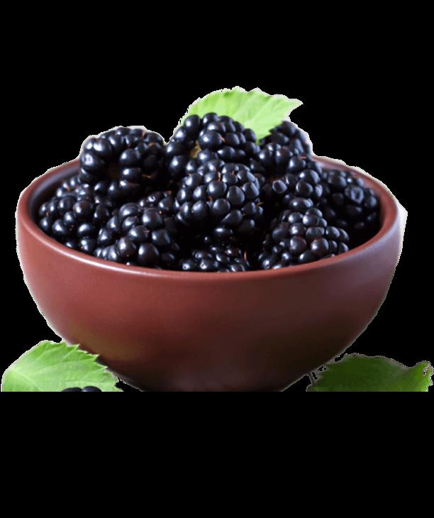 Blackberry_بلکبری_خانواده بری_berryfamily (7)